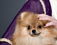 it's a Pomeranian dude.