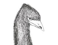 Emu - Drawing