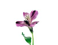 Flora on white
