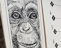 Animal Calendar 2013