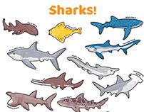 Shark Week Journal illustration and design