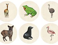 Chilean Animals / Ani Mali Bum
