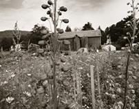 One farm, One decade