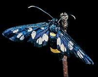 """""""butterflies (lepidoptera)"""""""