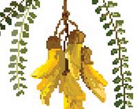 Nature.zip; Native seed Zine and pixel art
