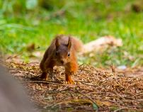 Mammal Photography