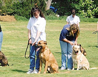 Effective Dog Training For Puppies