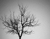 Tree of Life Variations