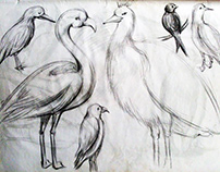 Animal & Bird Study From National Zoo