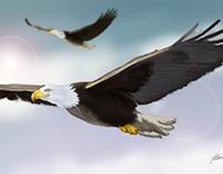 Águia . Eagle - Digital Painting