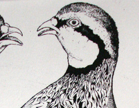 Partridges Copperplate