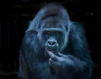 Apes & Primates Street