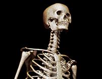 Skeleton Anatomy