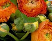 Joli Virágbolt / Joli-Flower Shop