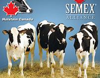 Holstein Canada | GenoTest Brochure