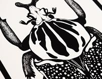 Goliath Beetle (Goliathus Giganteus)
