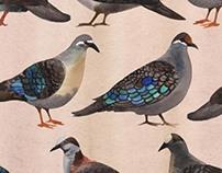 Bronzewing Pigeons