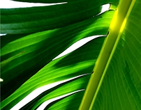 Vegetal - Under the Banana Tree - After the Rain