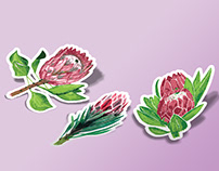 "Sticker pack ""Protea"""
