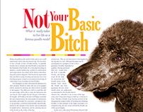 Poodle Magazine Spec