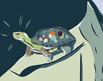 Turtle Shoulder