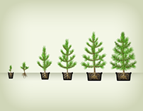 One-page online store of seedlings & trees