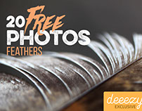 20 FREE Feather Photos