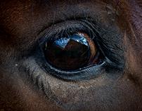 Architecture - Horses
