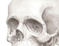 Crâne - Dessin