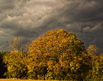 Storm + Trees