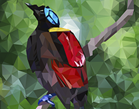 Paradise bird illustration