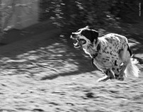 Perros Movidos