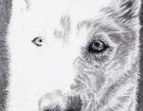 Freya - Graphite drawing