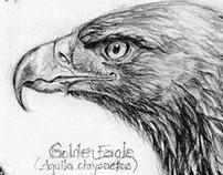 Raptor Sketchbook
