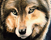 The Searcher - Timber Wolf