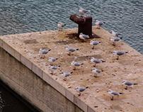 gulls before the rain
