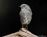 Birds Collection 37