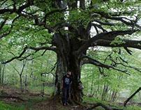Ispod visokog stabla...
