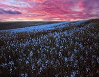 Blue field...