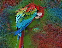 Purdy Bird