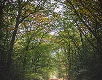 Forêt du Gavres