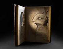 Ojo de Buey – Conejo