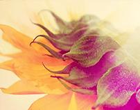 Digital Watercolors (De l'aquarelle)