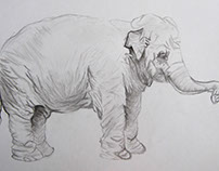 Sketch - Elephant