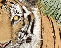 """Bengal Tiger"""