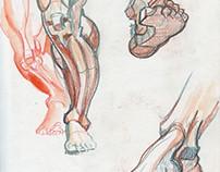Anatomie Studien