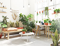 Livingroom-Plant