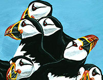 Atlantic Puffins Illustration