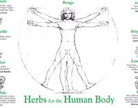 Herbs & The Human Body