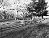Central park in Black and White Slide Show